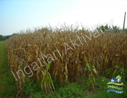 Mezőgazdasági terület